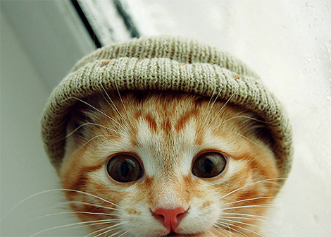 Chat bonnet